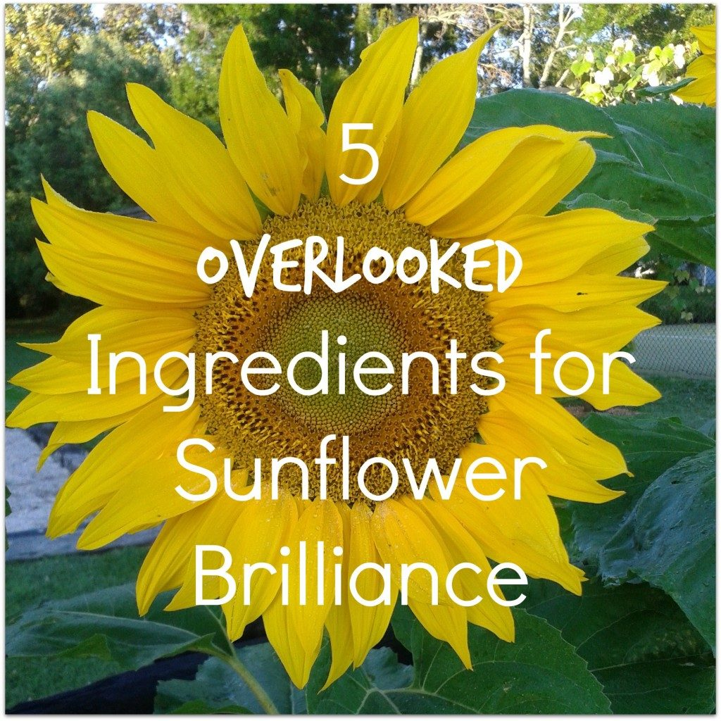 5 Overlooked Ingredients for Sunflower Brilliance