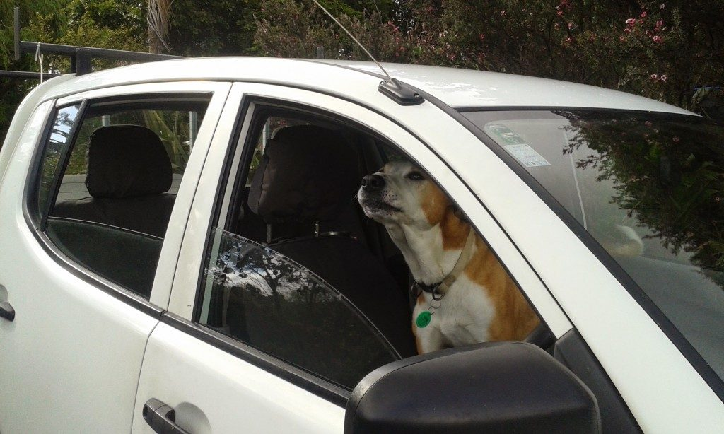 Our Dog Tyler in my new Truck