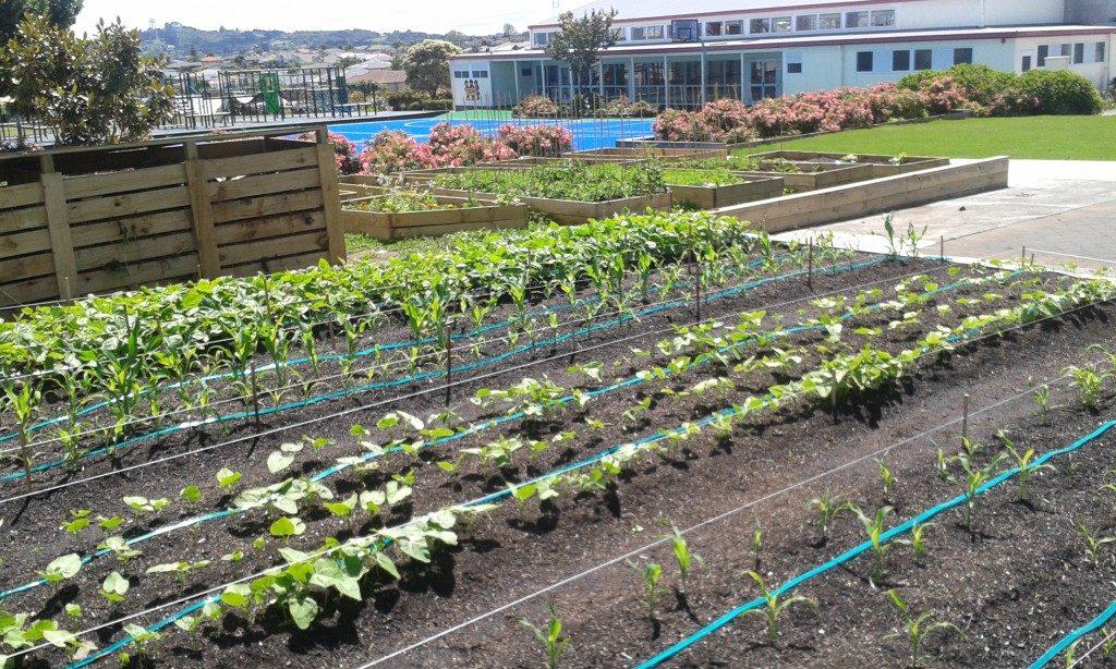 School Garden December 2014